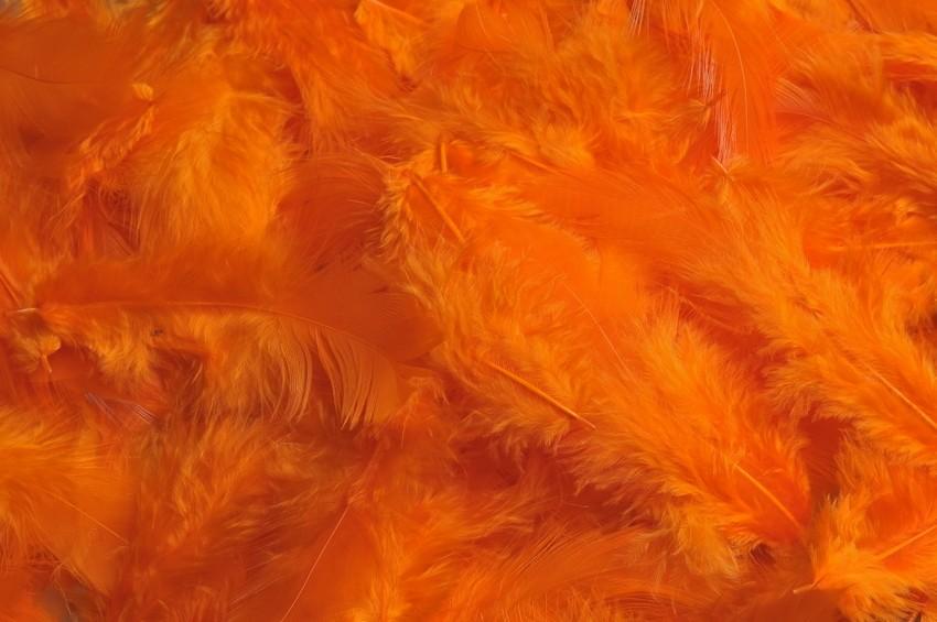 HM 0003_Orange