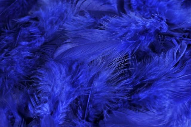 HM 0003_Dk Blue