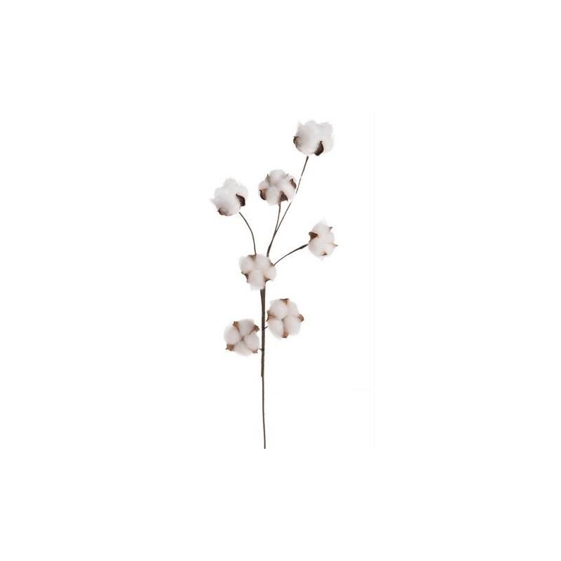 Gałązka bawełny x6..70 cm - naturalna bawełna