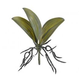 Liście storczyka 32x22 cm
