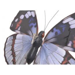 Motyl na klipie..24cm - olbrzymi
