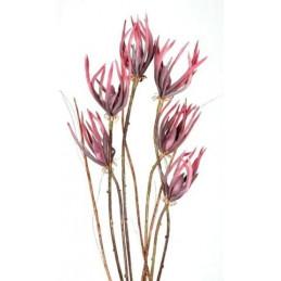 Pazurkowiec 95 cm - kwiat piankowy