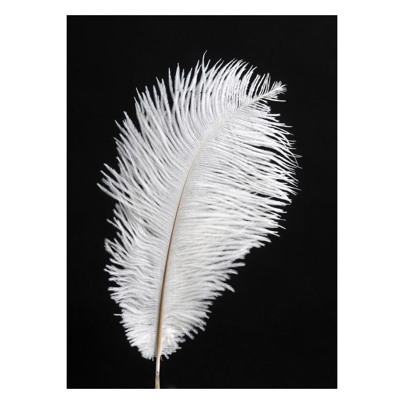 Pióra strusia 20-25cm, 3szt- paczka