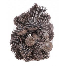 Pinus Niger 1kg -susz WW