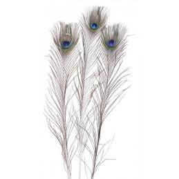 Pawie pióra 80-100cm, -  3 szt-paczka