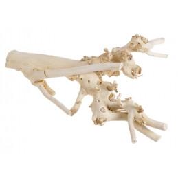 Korzeń morwy wybielany, 40 cm