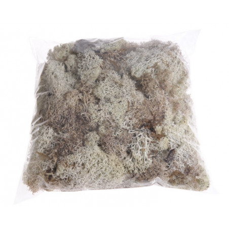 Island moss prep. pacz. 250g - mech chrobotek