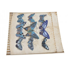 Motyl na klipie 6-10 cm, 9 szt/kpl DK BLUE