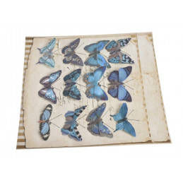 Motyl na klipie 6,5 cm, 12 szt/kpl BLUE