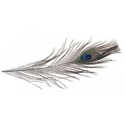 Pawie pióra 28-30 cm,12szt/paczka