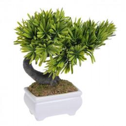 Bonsai małe - 25 cm