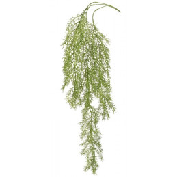 Asparagus zwisający 104 cm