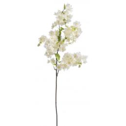 Wiśnia kwitnąca 100 cm