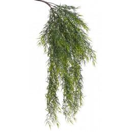 Pnącze asparagus spray 68 cm