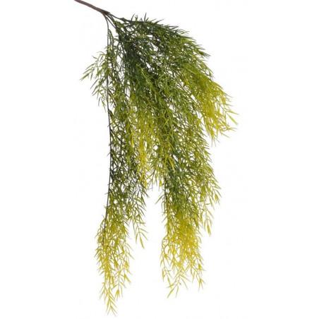 Pnącze asparagus 68 cm