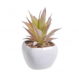 Kaktus w doniczce 16,5 cm