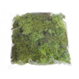 Mech chrobotek reniferowy - Island moss prep. pacz. 250 g - mech preparowany