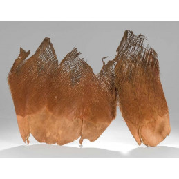 Palm bakla natural - kora palmowa LUZ