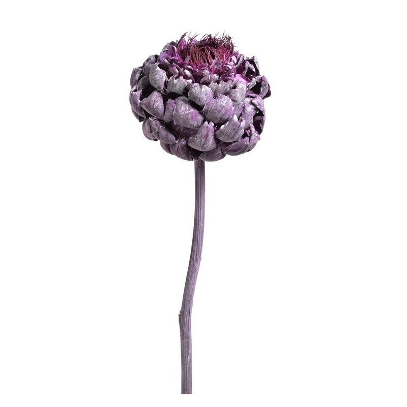 Artichoke flower frosted brombeer 30-40 cm - suszona roślina