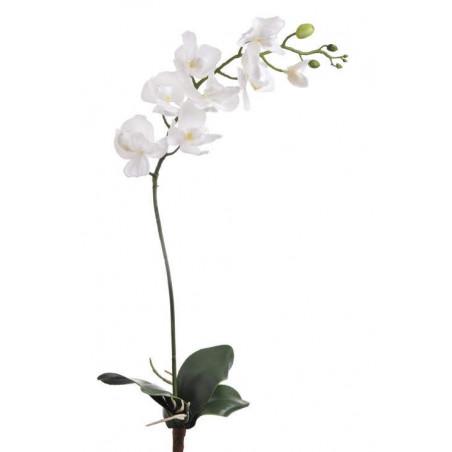 Storczyk gumowy z liściem 88 cm