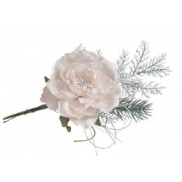 Róża chińska mała 10-25 cm