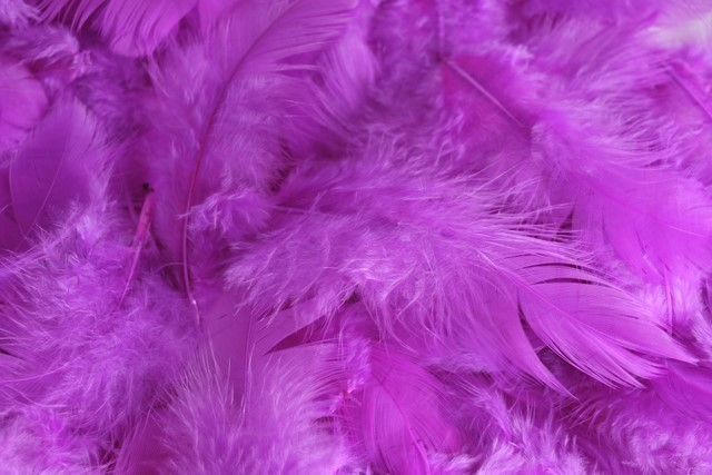 HM 0003_Purple