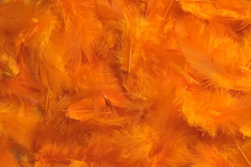 HM 0003_Lt Orange