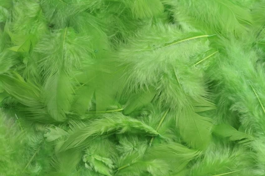 HM 0003_Apple Green