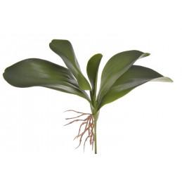 Liście storczyka 27cm