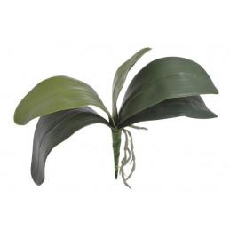 Liście storczyka 36 cm