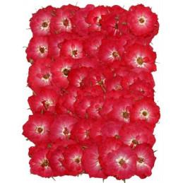 Prasowane kwiatki 2,5-3 cm - produkt naturalny