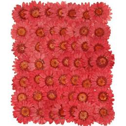 Prasowane kwiatki 4-5 cm - produkt naturalny