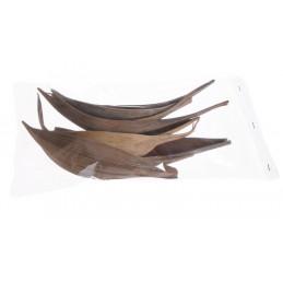 Coco shell medium paczka/5szt - susz