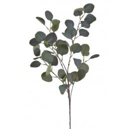 Gałązka eukaliptusa...