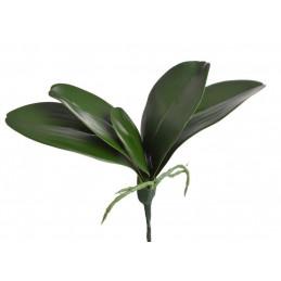 Liście storczyka..30 cm -...