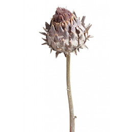 Cynara flower medium...