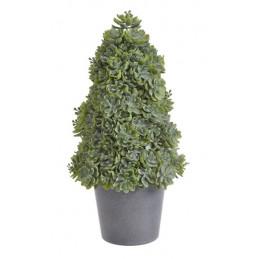 Zestaw Mini Kaktus W Doniczce 9 Cm Mix 12 Sztuk Kpl