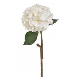 Hortensja x1 59 cm -...