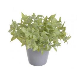 Zielona roślina w doniczce...