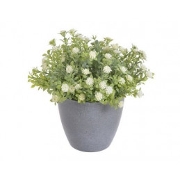 Kwiatuszki w doniczce 18 cm...