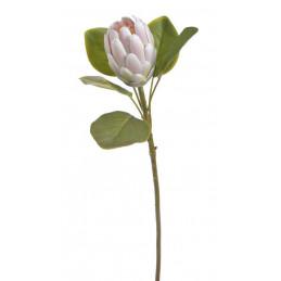 Protea x1...68 cm -...