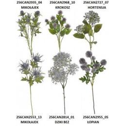 Mix roślin 6 rodzajów...