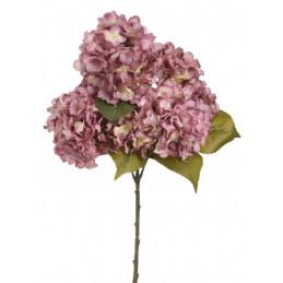 Hortensja krzak 60 cm - bukiet