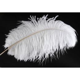 Pióra strusia 30-35 cm