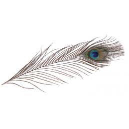 Pawie pióra 25 cm 3szt-paczaczka