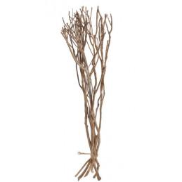 Gałęzie drzewa herbacianego N 72cm, 6szt