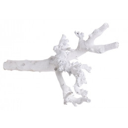 Korzeń morwy W Extra 48 cm WYBIELANY
