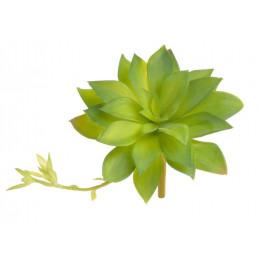 Sukulent 16x15 cm - sztuczna roślina 2 KOLORY