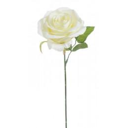 Róża pojedyncza 30 cm