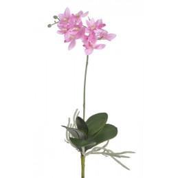 Mini storczyk z lisciem 35 cm